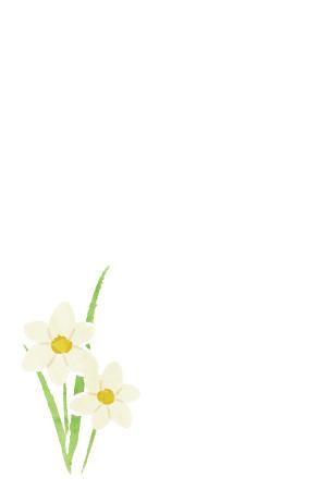 水仙の花を描いたお歳暮お礼状はがき さきちん絵葉書